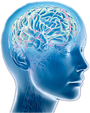 head with brain image no background